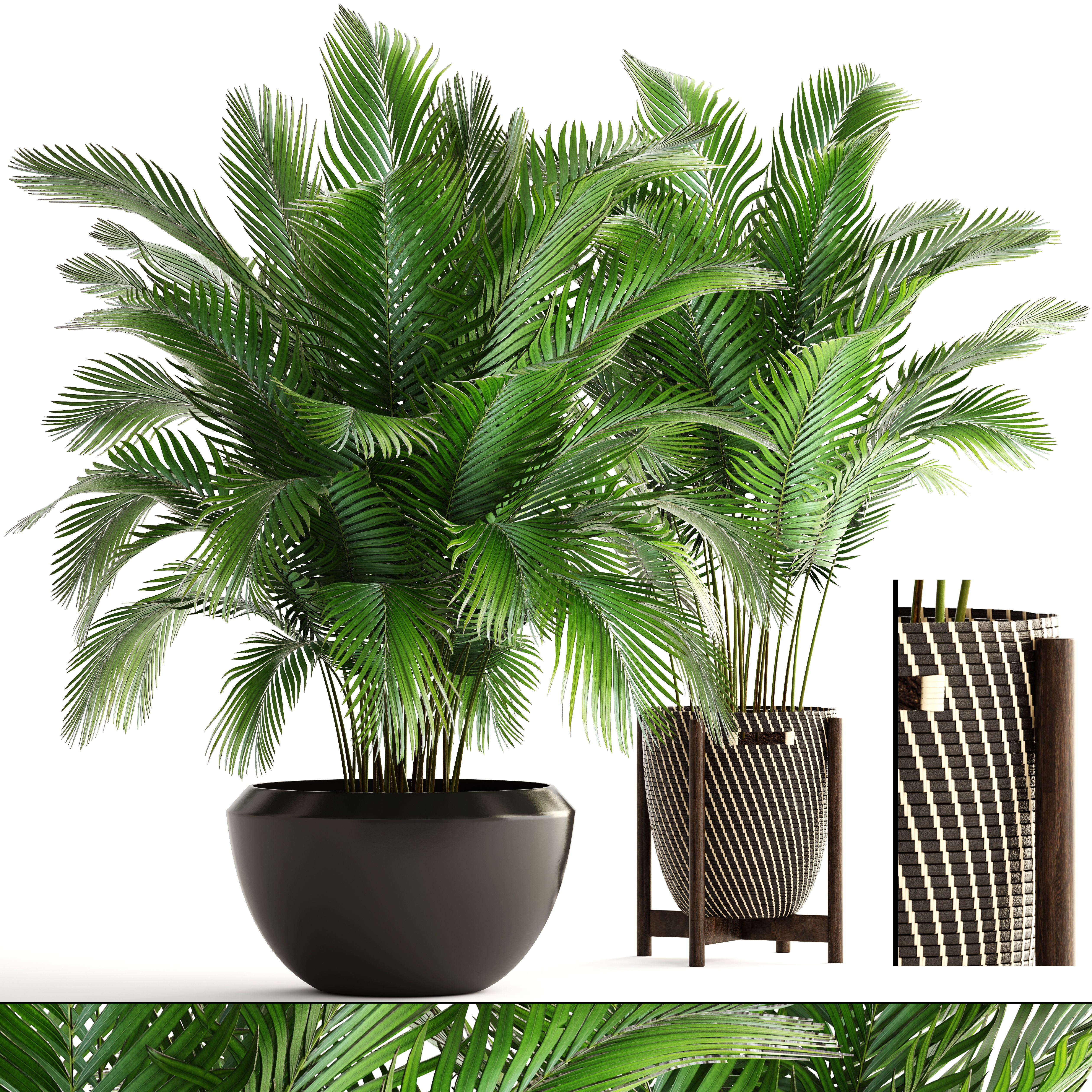 Collection of plants Areca Palm   3D model