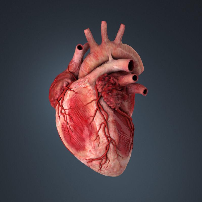 3d Model Human Heart Human Cgtrader