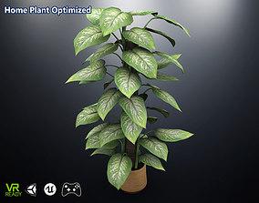 Home Plant Dieffenbachia 3D asset