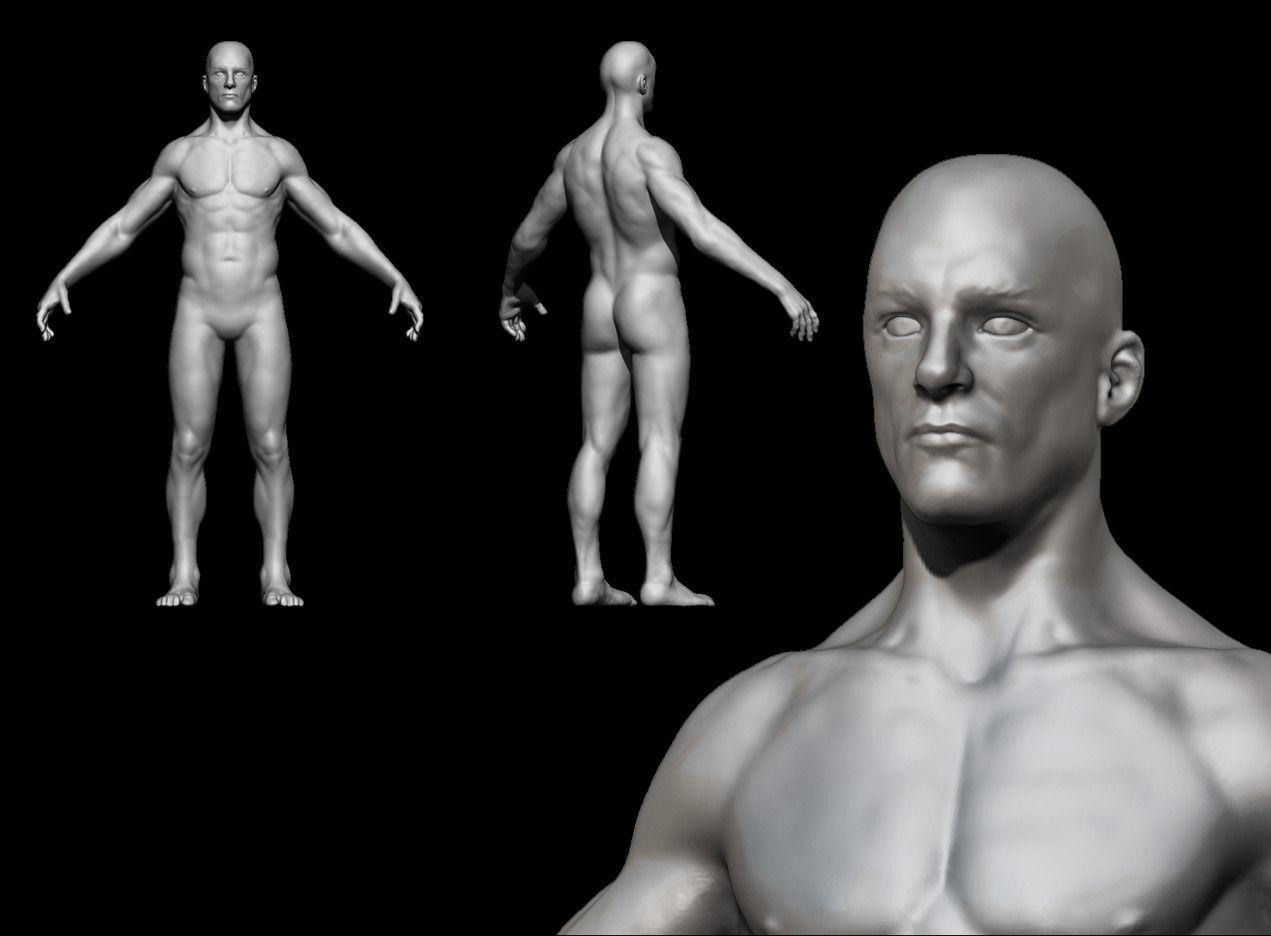 Human Anatomy For Study 3d Cgtrader