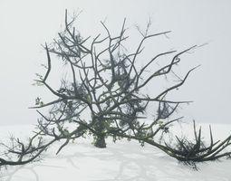3D model Tree Die Old