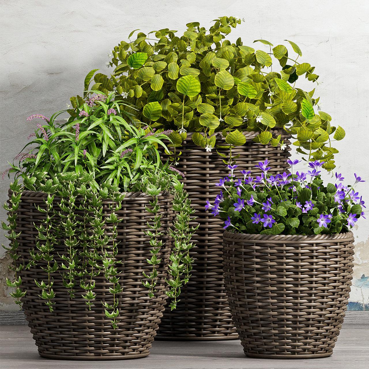 Decorative plant set-45