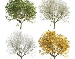 3D model Apple Tree 4 Seasons