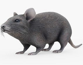 Mouse Rigged with Fur 3D model
