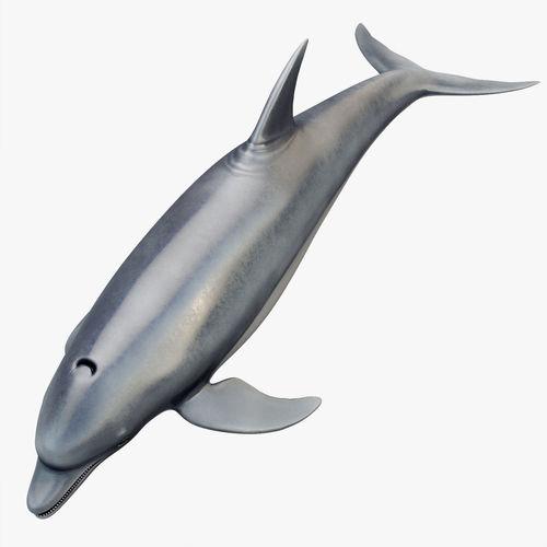 3D model Animated Dolphin | 3D model