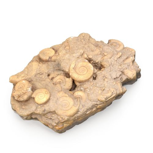 fossils rock 3d model max obj mtl 3ds fbx 1