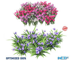 3D model Catharanthus Roseus and Babiana Blue Flower