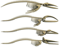 Whale Skeletons Collection 3D model