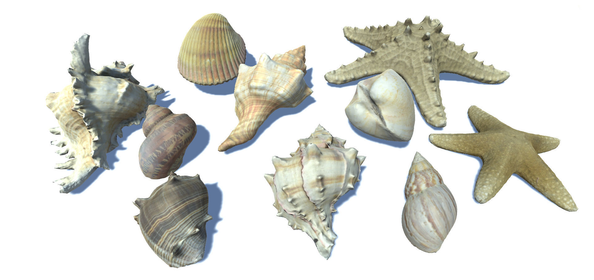 Seashells and Starfishes Vol 3
