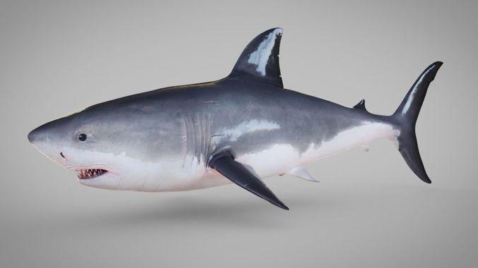 shark rigged blender 3d model rigged obj mtl 3ds fbx stl 1