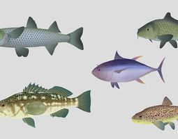 3D asset Fish Collection 05