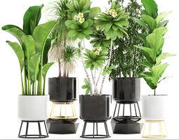 3D model pot Collection of plants
