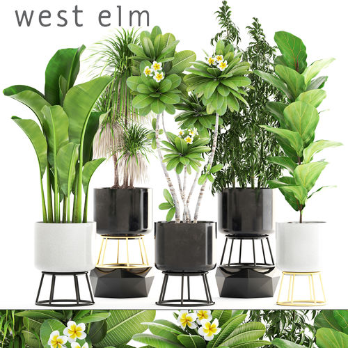 collection of plants 3d model max obj mtl fbx unitypackage prefab 1