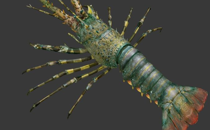 lobster    australian lobster 3d model low-poly max obj mtl 1