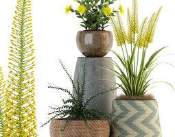 3D model Plants collection 81