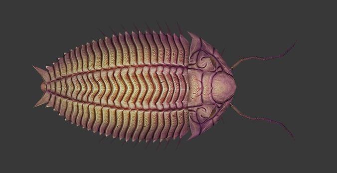 trilobites 3d model low-poly fbx ma mb unitypackage prefab 1