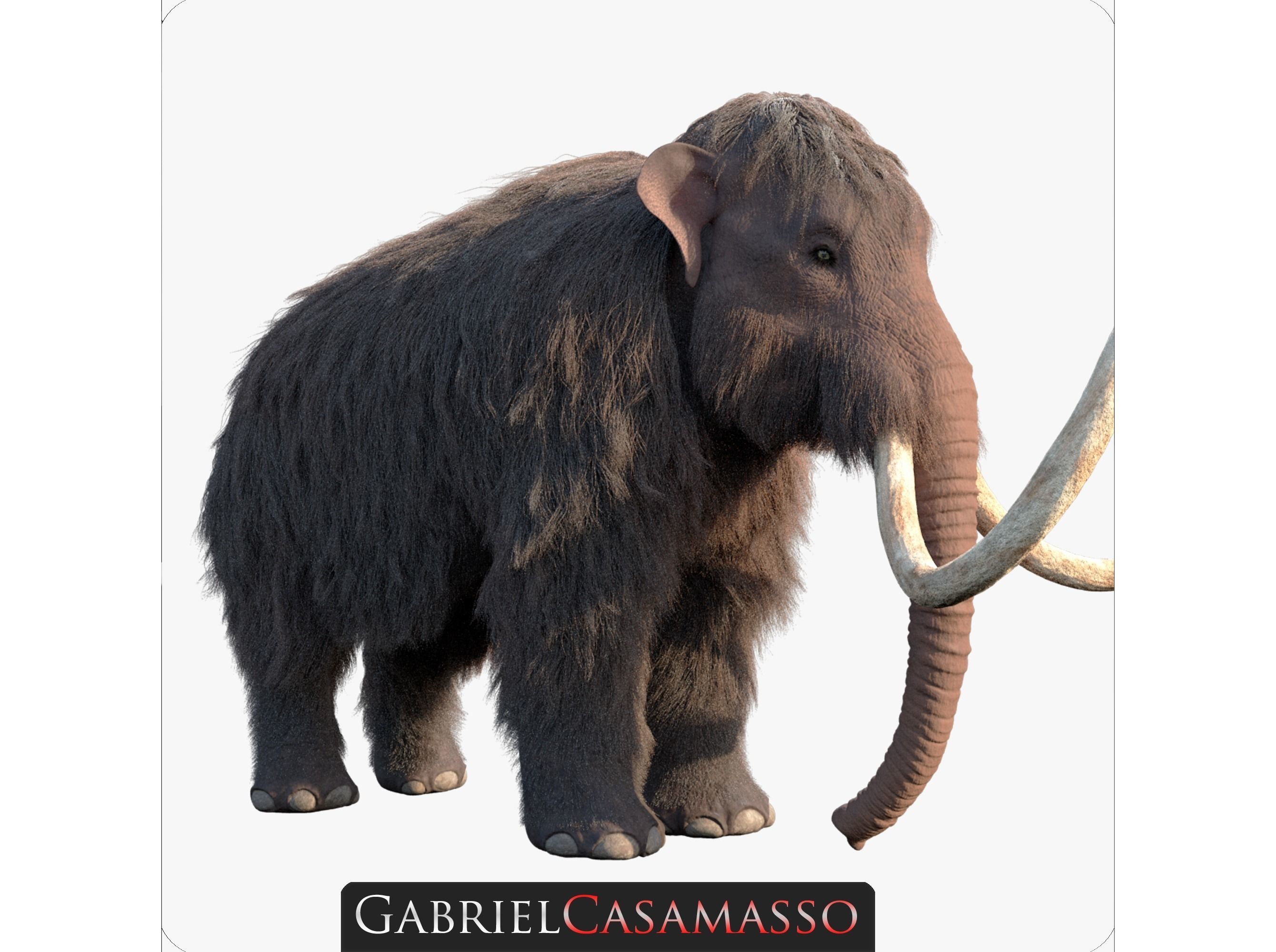 Woolly Mammoth - Mammuthus primigenius
