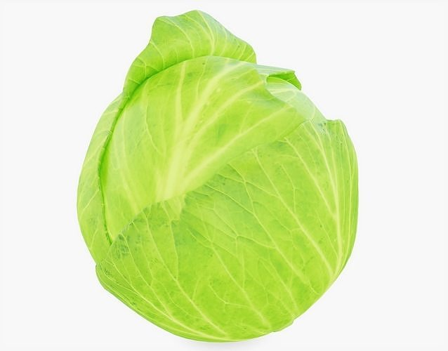 cabbage vegetable 3d model obj mtl 3ds fbx stl blend 1