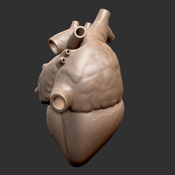 Printable Accurate Human Heart 3d Model 3d Printable Obj