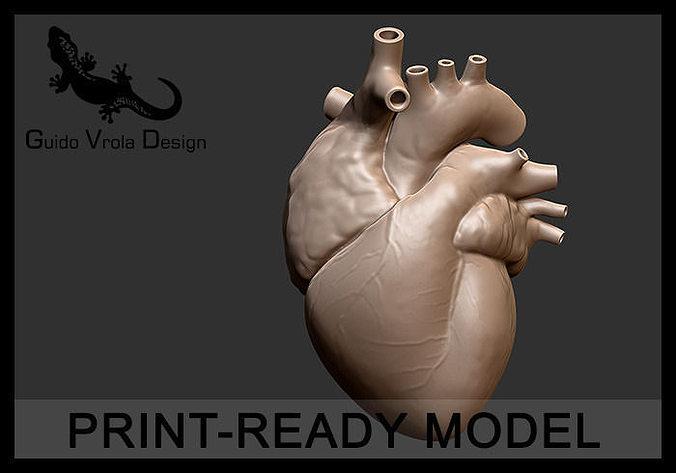 printable accurate human heart 3d model obj mtl stl 1