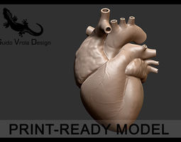 printable accurate human heart 3d model obj stl