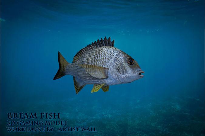 bream fish lowpoly 3d gaming model 3d model obj fbx ma mb mtl 1
