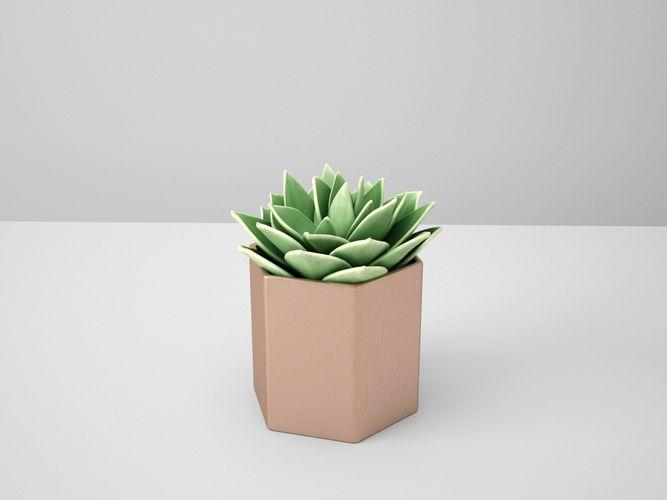 succulent echeveriar star copper potted cactus 3d model obj mtl fbx ma mb 1