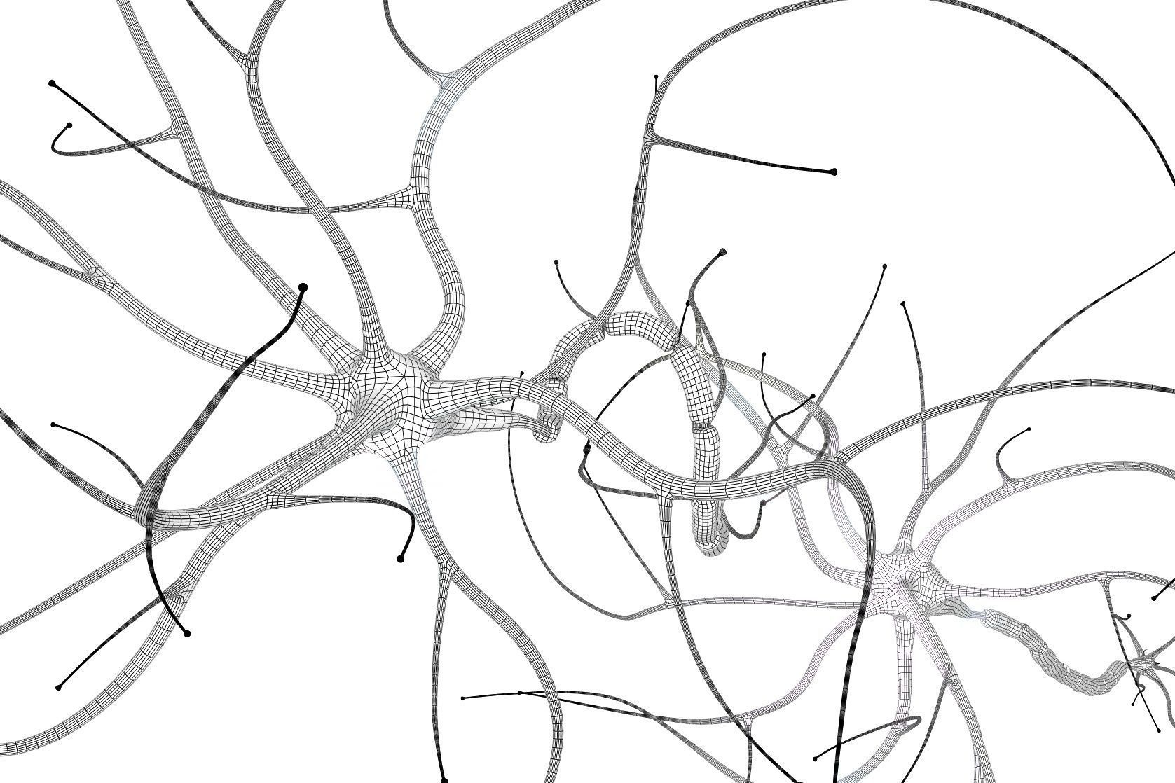 3d Nerve Cell Anatomy In Details Cgtrader