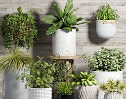 3D model Decorative plant set-52