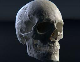 Photorealistic human skull 3D model death