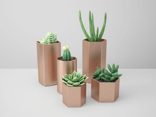 copper potted cactus set 3d model obj mtl fbx ma mb 1