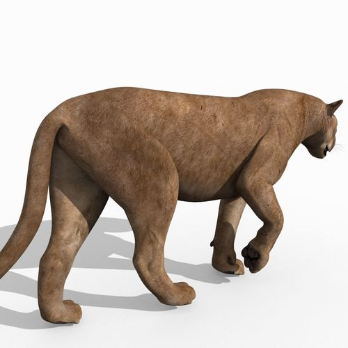 Mountain Lion 3d Model Animated Cgtrader