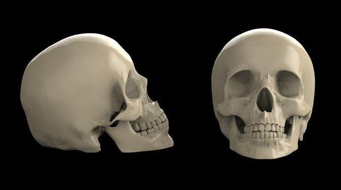 skull 3d model 3d model max obj mtl fbx stl 1
