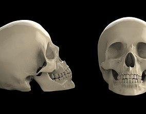 teeth sculptures skull 3d model