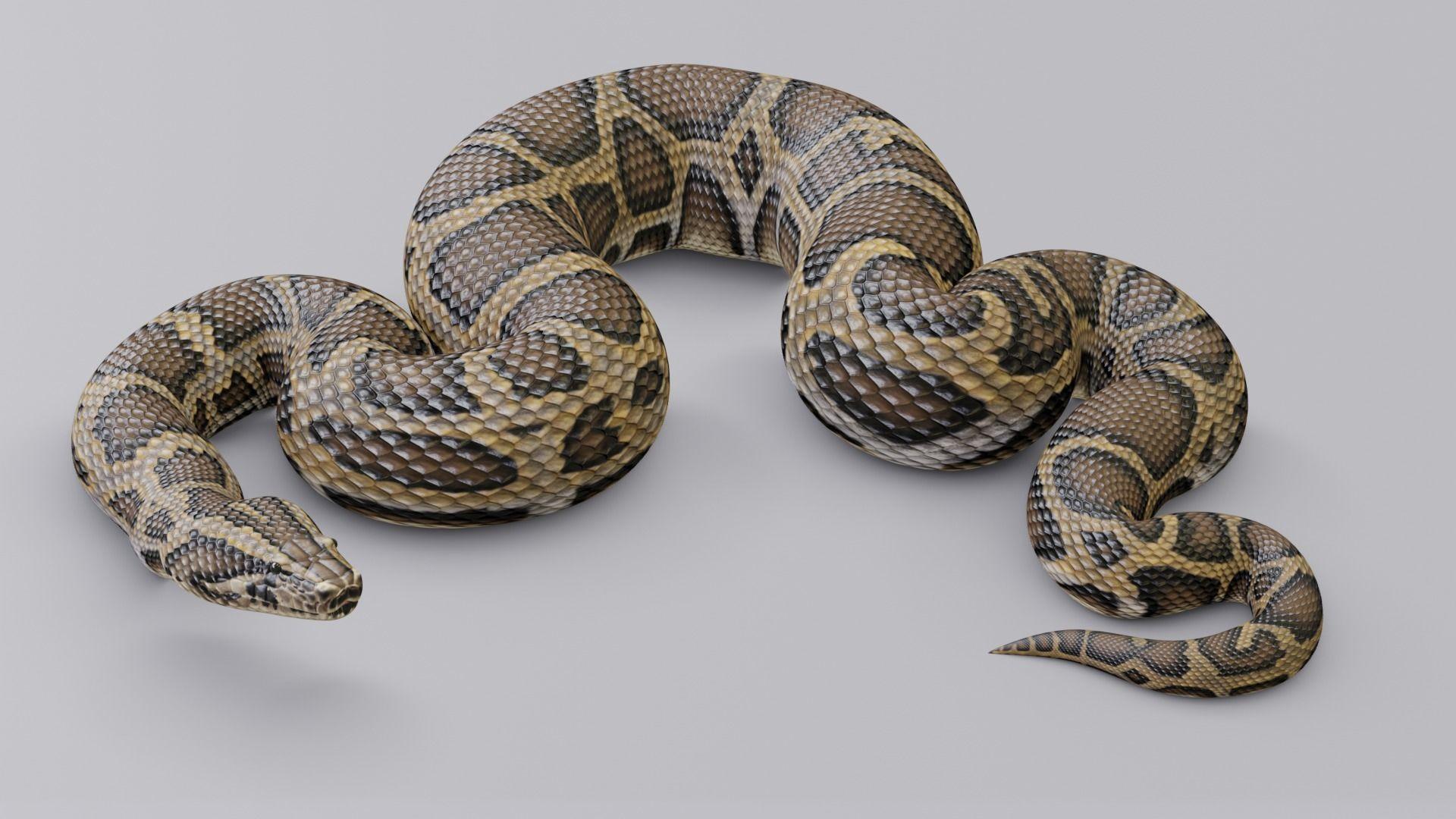 Animated Burmese Python