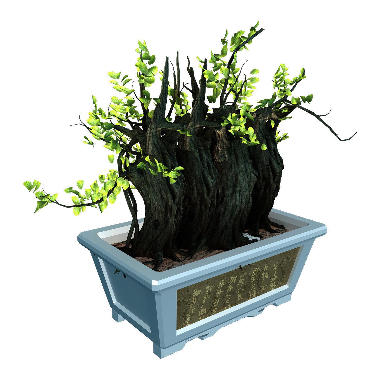 3D model Indoor - potted plants - plants 07 | CGTrader