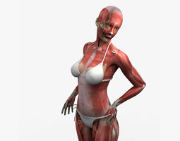 3D Detailed Full Female Muscle Anatomy Rigged