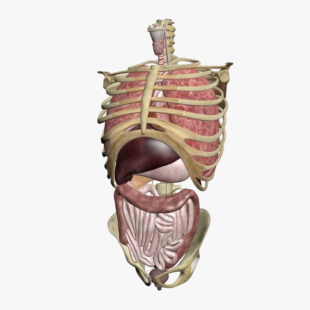 Atemberaubend Anatomie Therapie Heiler Baskar Zeitgenössisch ...