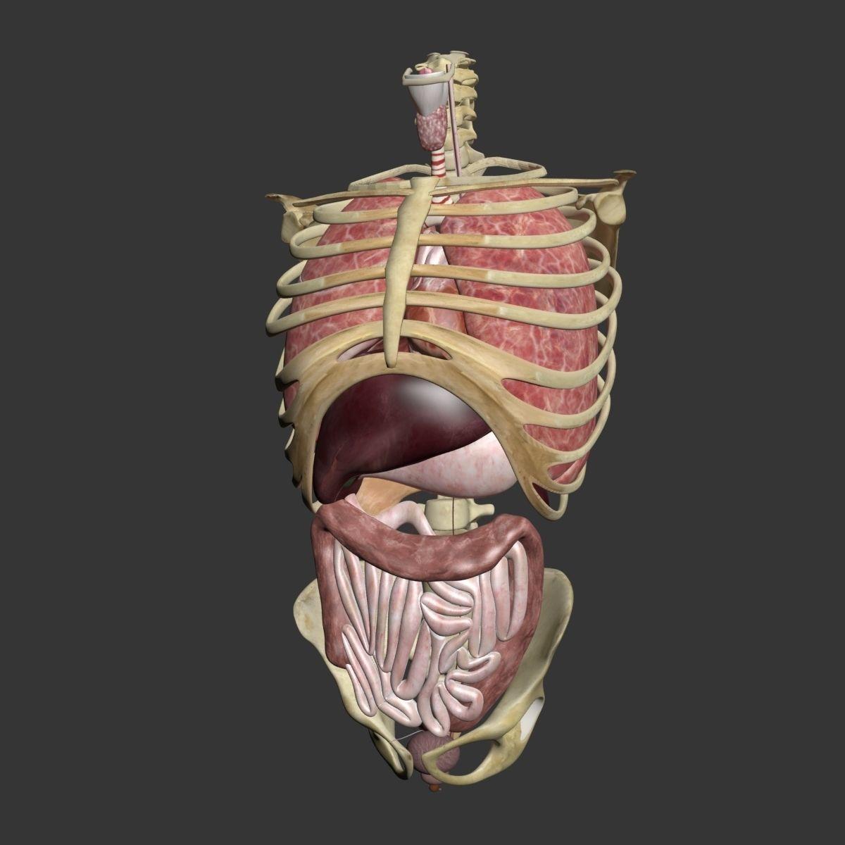 Ziemlich Beste 3d Anatomie Galerie - Physiologie Von Menschlichen ...