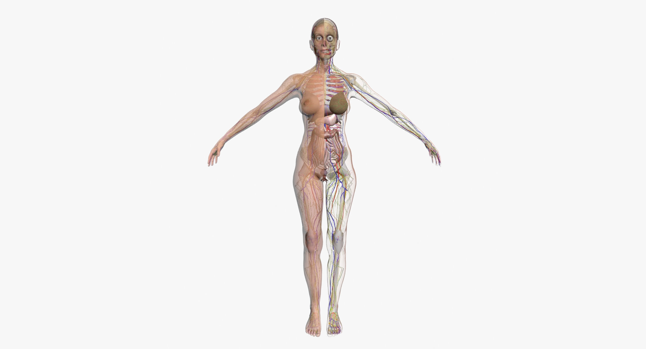 Female Full Body 3dsmax Cgtrader