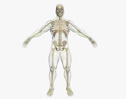 Central Nervous System with Skeleton 3DSmax