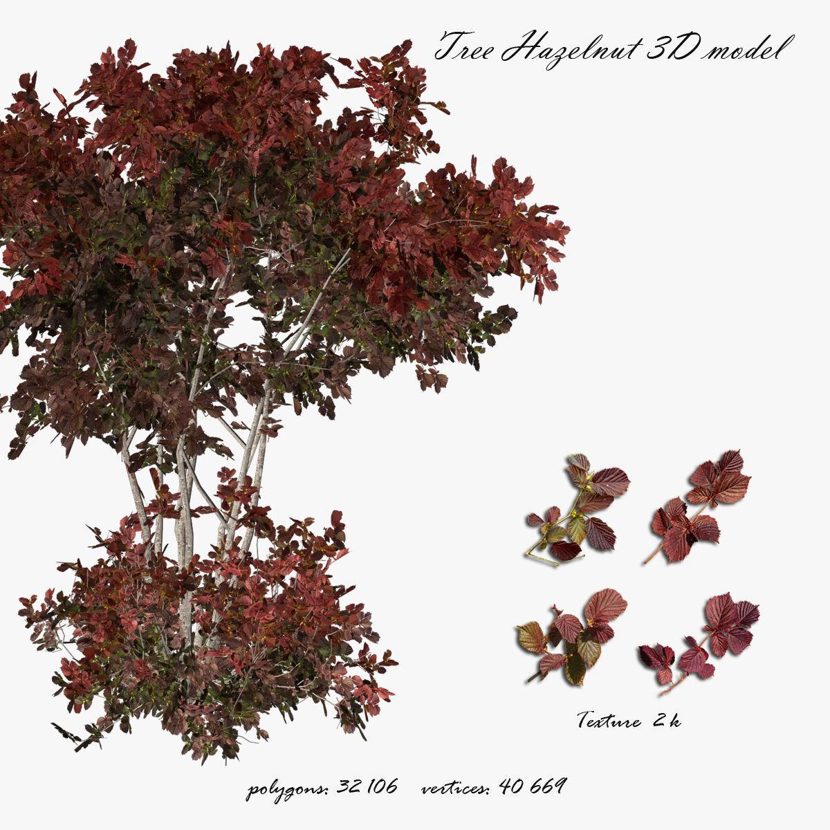 Hazelnut tree red