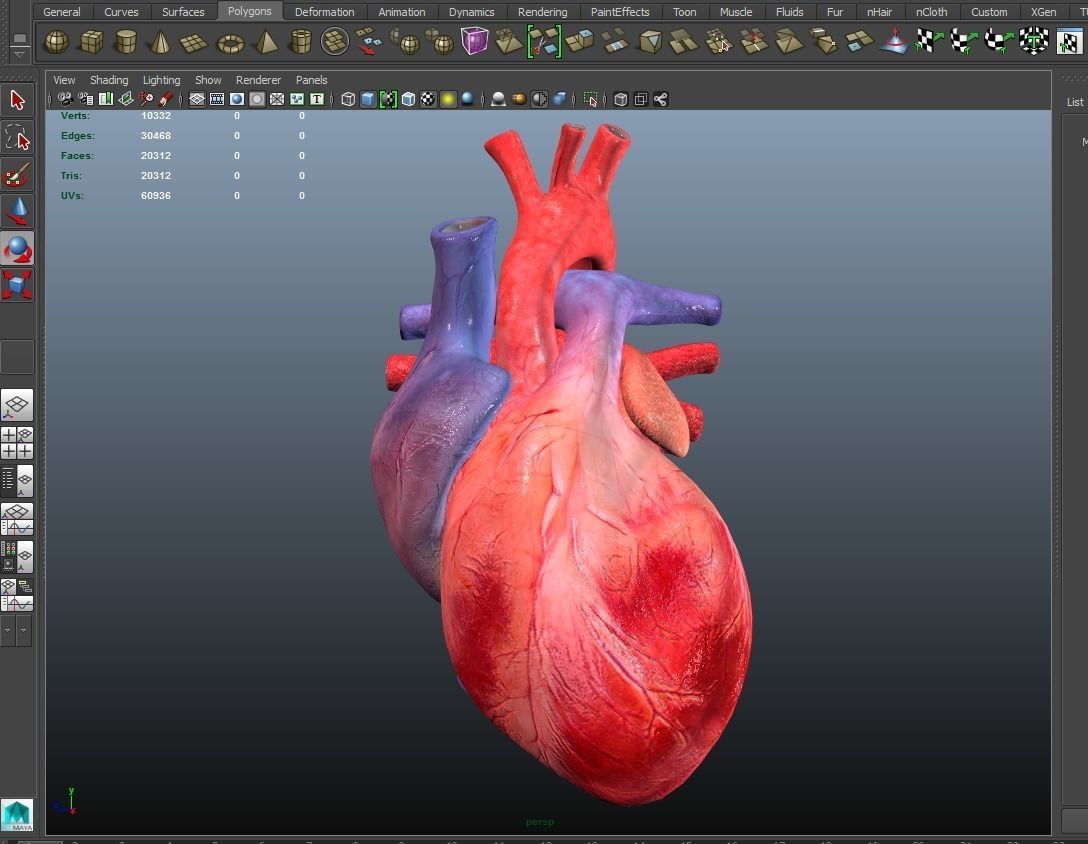 Heart Animated 3D model | CGTrader
