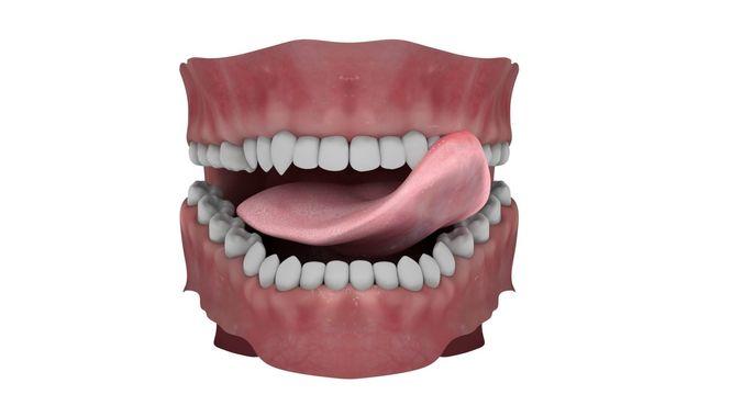 Teeth and Tongue Rigged