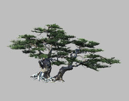 3D Journey to the West - Putuo Mountain - Pine 01