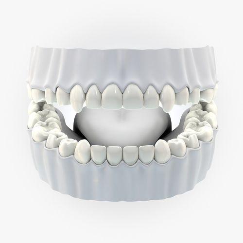 teeth tongue without texture 3d model 3d model obj mtl 3ds fbx c4d dxf dae 1