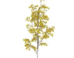 3d model birch