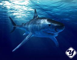 Great White Shark model rigged
