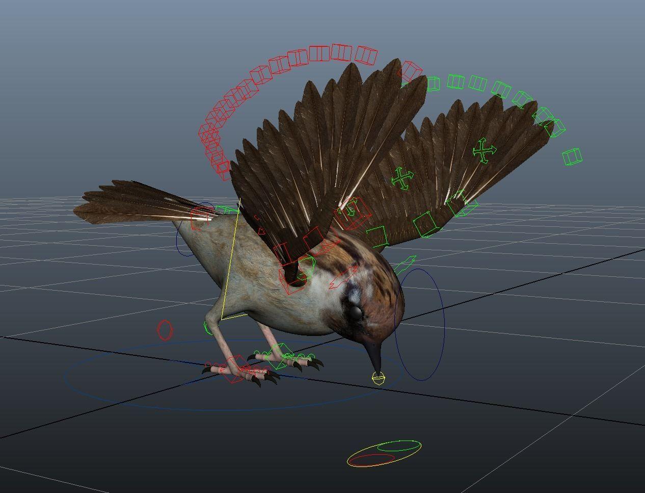 Rig Sparrow Bird