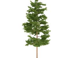 3D model Pine height 3 metre